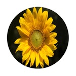 Sunflower Round Rubber Coaster Custom Round Coasters