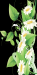 daisies1.jpg