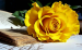 95 - Beautiful Rose.jpg